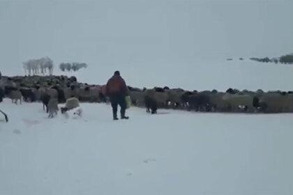 Дагестанского пастуха спасли из снежного плена в Калмыкии
