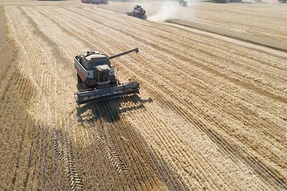 Российский регион поставил рекорд по сбору зерна
