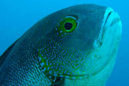Поймана самая старая тропическая рыба в мире