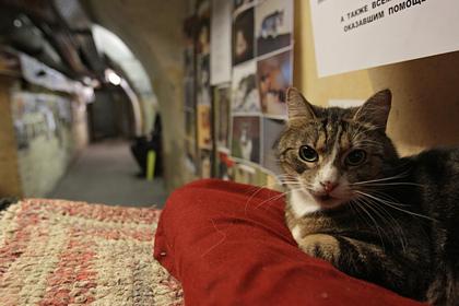 Француз завещал наследство котам из российского музея