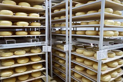 Власти Подмосковья рассказали о росте сырного производства
