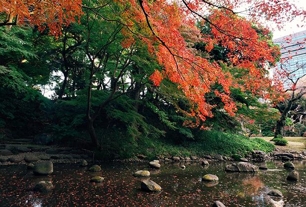 Яркая осень в Токио