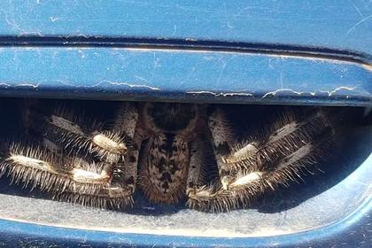 Гигантский паук под ручкой автомобиля ужаснул пользователей сети