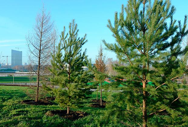 Озеленение Центрального парка инновационного центра «Сколково»