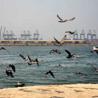 Порт Джидда