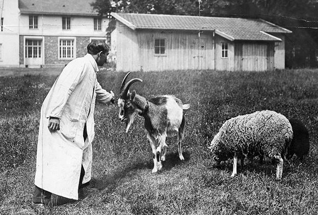 Доктор Сергей Воронов и подопытные животные. Франция, май 1924 года