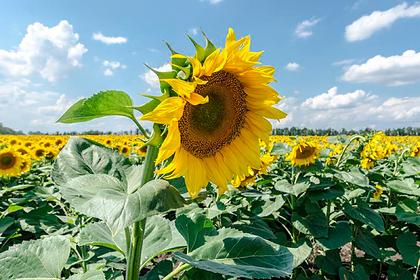 Власти Кубани рассказали о влиянии пандемии на объемы экспорта сельхозпродукции