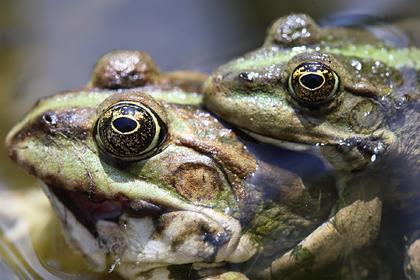 Супругов заставили осушить пруд на участке из-за жалоб соседа на громких лягушек