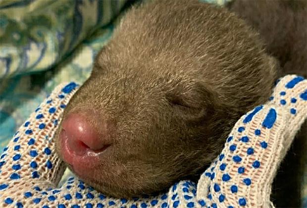 Брошенный в российском лесу медвежонок, которого спасла собака