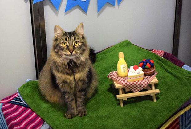 «Самая одинокая» кошка Великобритании по кличке Моник обрела хозяев