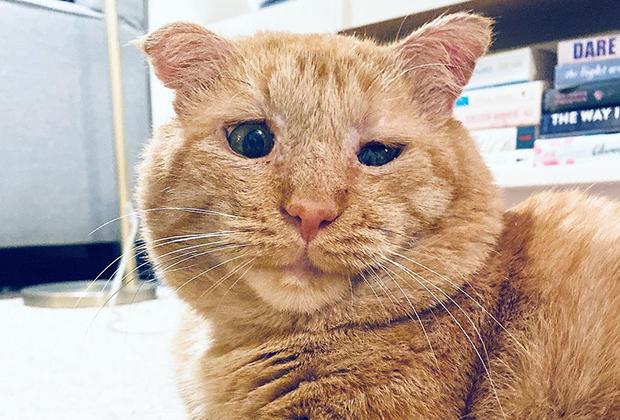 Грустный кот Брюс Уиллис обрел хозяйку и стал самым счастливым