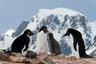 При всей своей прелести туристская деятельность способна нанести значительный урон Заполярью. Арктический и Антарктический регионы считаются крайне хрупкими с точки зрения экологии из-за своих природно-географических особенностей.  <br></br> В последнее время обсуждается, насколько туризм совместим с подписанным в 1959 году рядом государств Договором об Антарктике, задача которого — обеспечить использование региона исключительно в мирных целях. Извлечь выгоду из еще не освоенных территорий пытаются многие, где-то даже разрабатываются планы постройки гостиниц и казино.