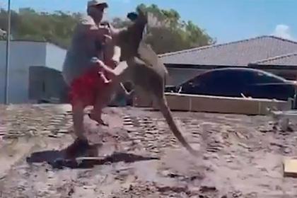 Отец попытался защитить детей от кенгуру и был нокаутирован