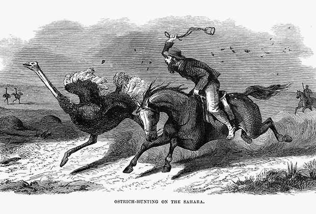 Страусиная охота в Сахаре