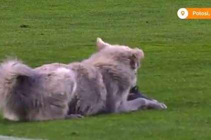 Бездомный пес прервал футбольный матч и обрел хозяина
