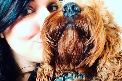 Домашний пес погнался за лебедями и умер в муках на глазах у хозяйки