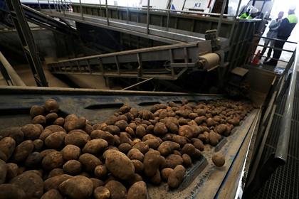 Россиянам предложат картофель «экономкласса»