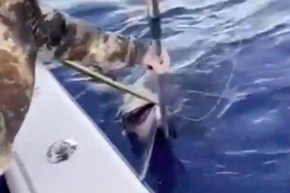 Три рыбака поймали меч-рыбу рекордной величины
