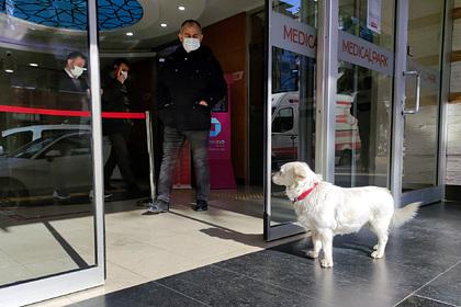 Верная собака шесть дней ждала хозяина перед больницей