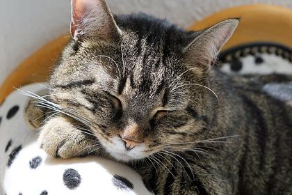 Друзья отпраздновали день рождения кошки и попали в больницу