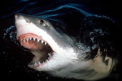 Жена спасла купавшегося в озере океанолога от нападения акулы