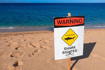 Акула напала на 73-летнего туриста