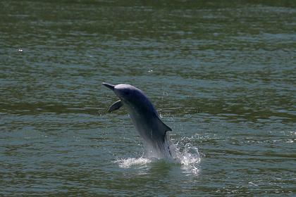 Ирландский сенатор обвинил Путина в пропаже местного дельфина
