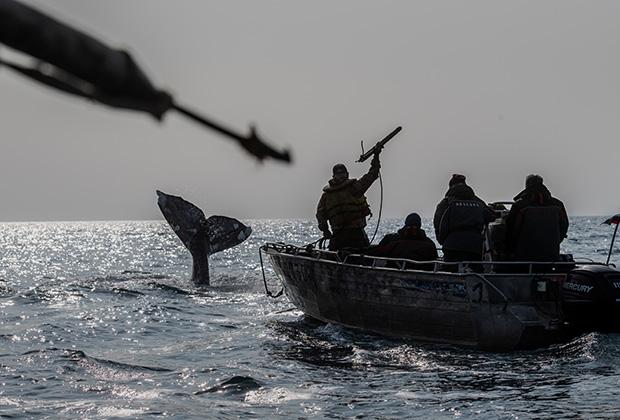 Китобои во время охоты на кита