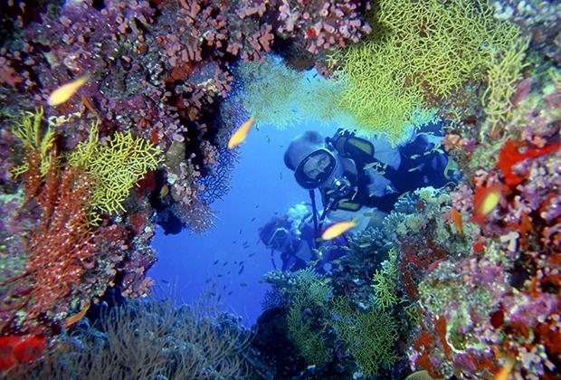 Дайвинг на мальдивском острове Куреду