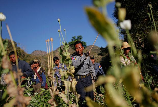 Уничтожение полей опиумного мака в штате Шан в Мьянме