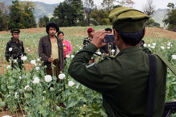 SHAN STATE, MYANMAR - 2014/02/22: A soldier from the TNLA (Ta'ang National Liberation Army, Ta'ang is another word for Palaung) takes pictures of opium field workers and other soldiers before they start to destroy the field. The TNLA started a drug (opium, heroin, methamphetamine) eradication campaign in 2012, destroying opium fields, banning and punishing drug addicts and traffickers. The TNLA, created in 2009, claims about 1,500 soldiers and another 1,500 trained villagers. Alongside with other ethnic groups, the TNLA fights the government troops in order to get some kind of autonomy within a federal system for the Palaung populated area in north-west Shan State. (Photo by Thierry Falise/LightRocket via Getty Images)