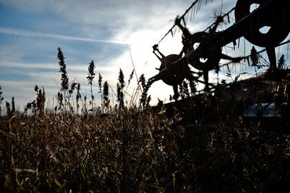 Армения захотела выращивать промышленную коноплю для выхода из кризиса