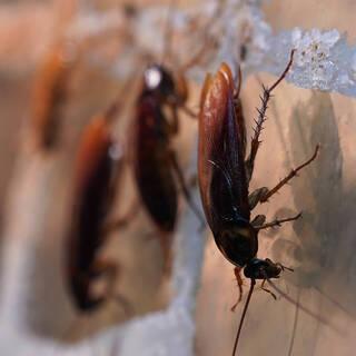 Россиянам назвали способы борьбы с чужими тараканами