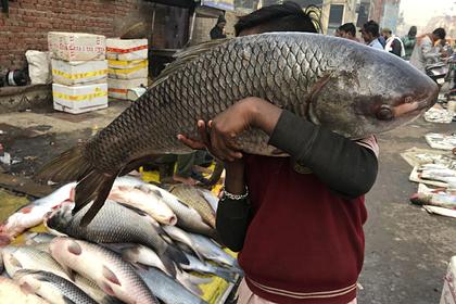 Мальчик несет рыбу на рынок в Праяграджа