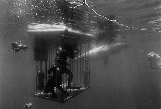 Съемка фильма «Синяя вода, белая смерть»