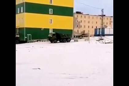 Погоня белых медведей за КамАЗом попала на видео