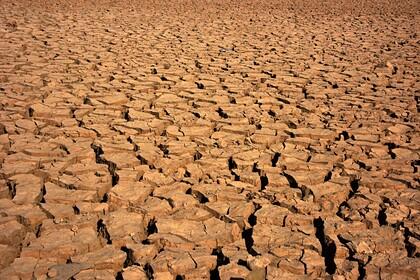 Украине предсказали засуху и снижение урожайности: Украина: Бывший СССР: Lenta.ru