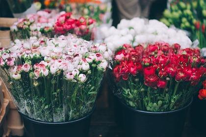 В России спрогнозировали рост цен на цветы к 8 марта: Рынки: Экономика: Lenta.ru