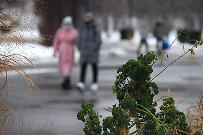 Синоптик пообещал россиянам резкую оттепель: Общество: Россия: Lenta.ru