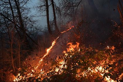 В Госдуме задумали в 10 раз увеличить штрафы за лесные пожары