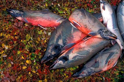 В России решили хранить собственную рыбу в Японии