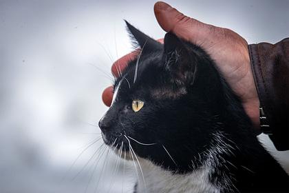 Домашний кот сбежал от хозяйки и вернулся обратно через 14 лет