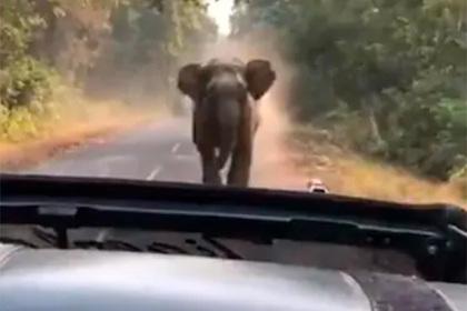 Слон погнался за джипом с туристами и попал на видео