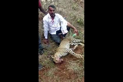Мужчина убил леопарда голыми руками ради спасения жены и дочери