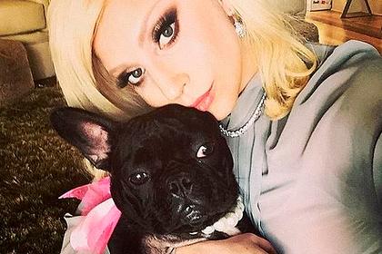 Леди Гага пообещала полмиллиона долларов за возвращение ее собак