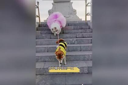 Женщина завела собаку-поводыря для своей слепой собаки