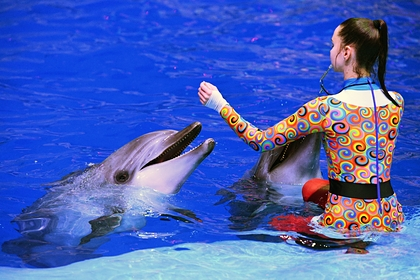 В Госдуме захотели запретить вылов дельфинов и косаток для дельфинариев