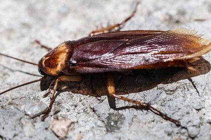 Женщина травила насекомых и убила соседку с десятимесячным ребенком
