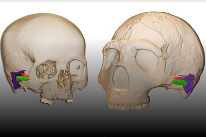 У неандертальцев раскрыли неожиданную способность