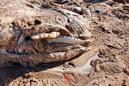 На берегу моря нашли тушу загадочного существа длиной семь метров